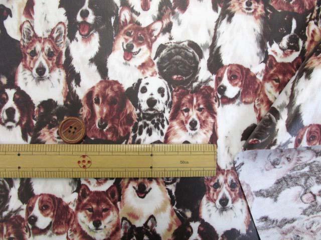 画像3: わんちゃん大集合・イヌ・犬柄 オックス生地 ラミネート はぎれ80cm↑(セピア)