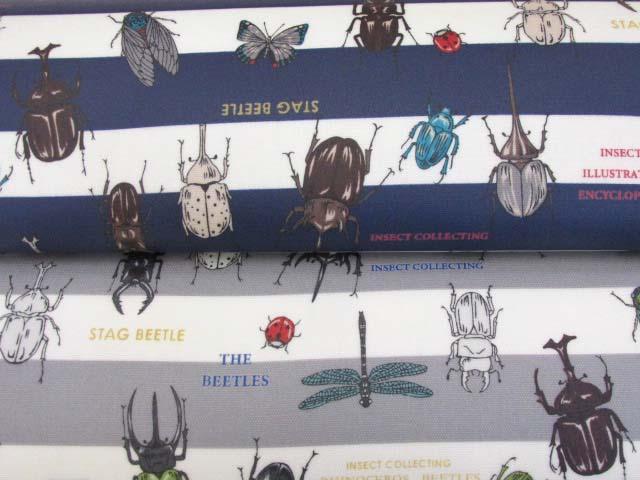 画像1: 昆虫図鑑・カブトムシ・クワガタムシ・ボーダー柄 オックス生地 ラミネート つや消し