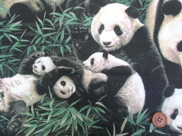画像1: さららシリーズ パンダの家族柄 インクジェットプリント シーチング生地