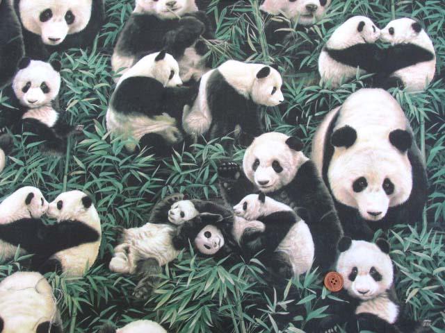 画像2: さららシリーズ パンダの家族柄 インクジェットプリント シーチング生地