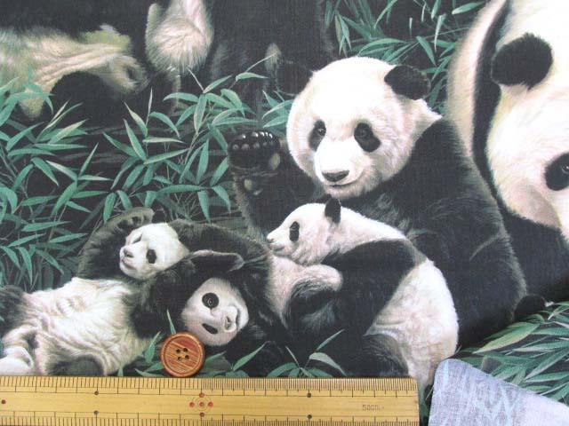 画像3: さららシリーズ パンダの家族柄 インクジェットプリント シーチング生地