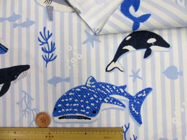 画像3: ▼サメ・シャチ・クジラ・ストライプ柄 オックス生地◆訳ありはぎれ40cm